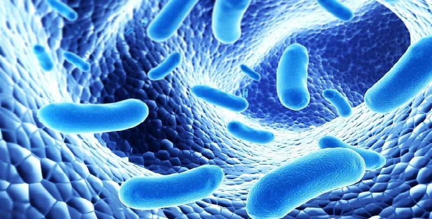 Пробиотично почистване и хигиена. Основни положения - част 5