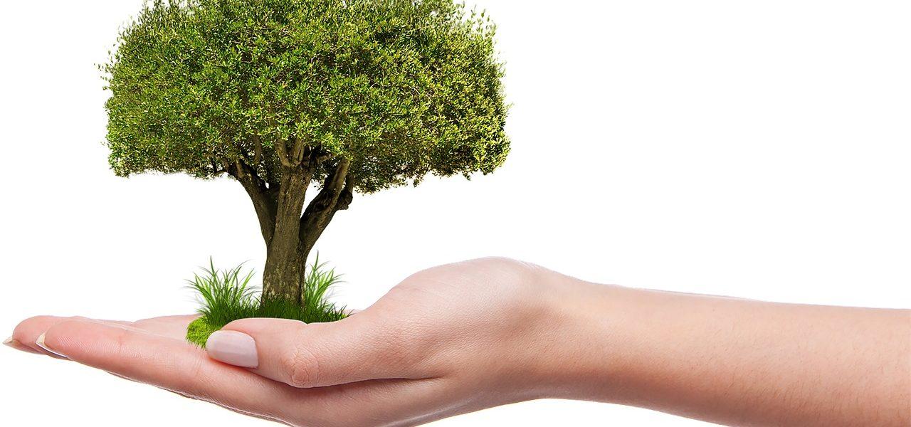 Как да засадим дърво? - Ecocleaner